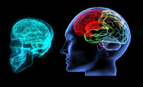 سلسلة مكونة من أربعة حلقات تدور حول الدماغ البشري منذ بداية تكوينه عند  الجنين وكيف يتم تكوين الجهاز العصبى للانسان ونمو المخ عبر مراحل إبتداأ من  نمو الدماغ ...